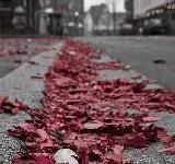 Foglie secche rosse